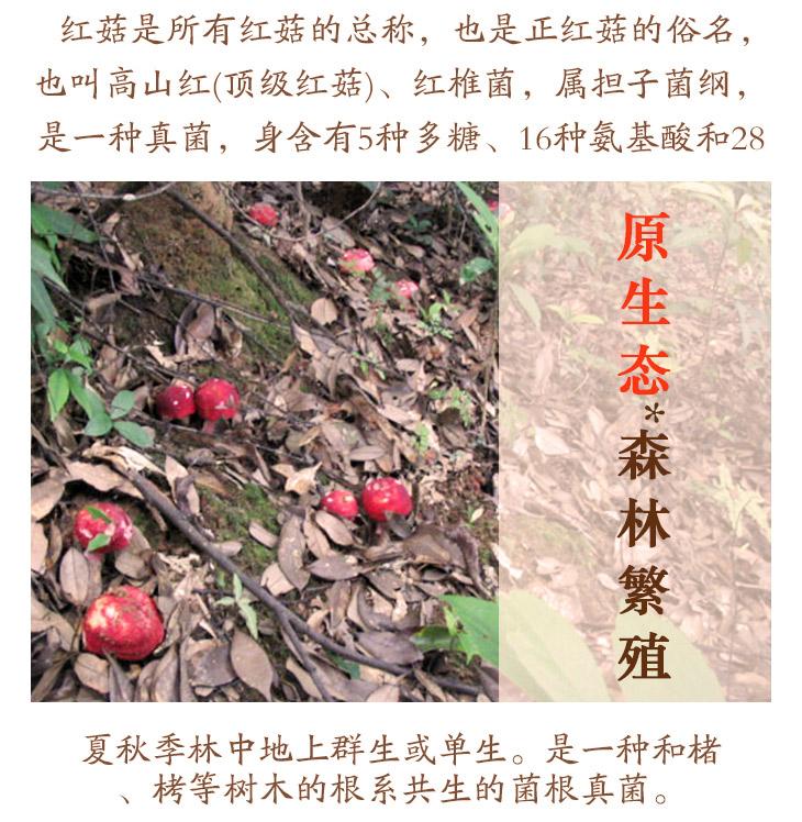 红菇_04.jpg