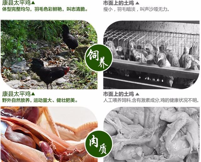 鸡_10.jpg